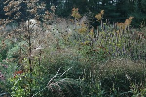 Perennial Meadow Fall-12